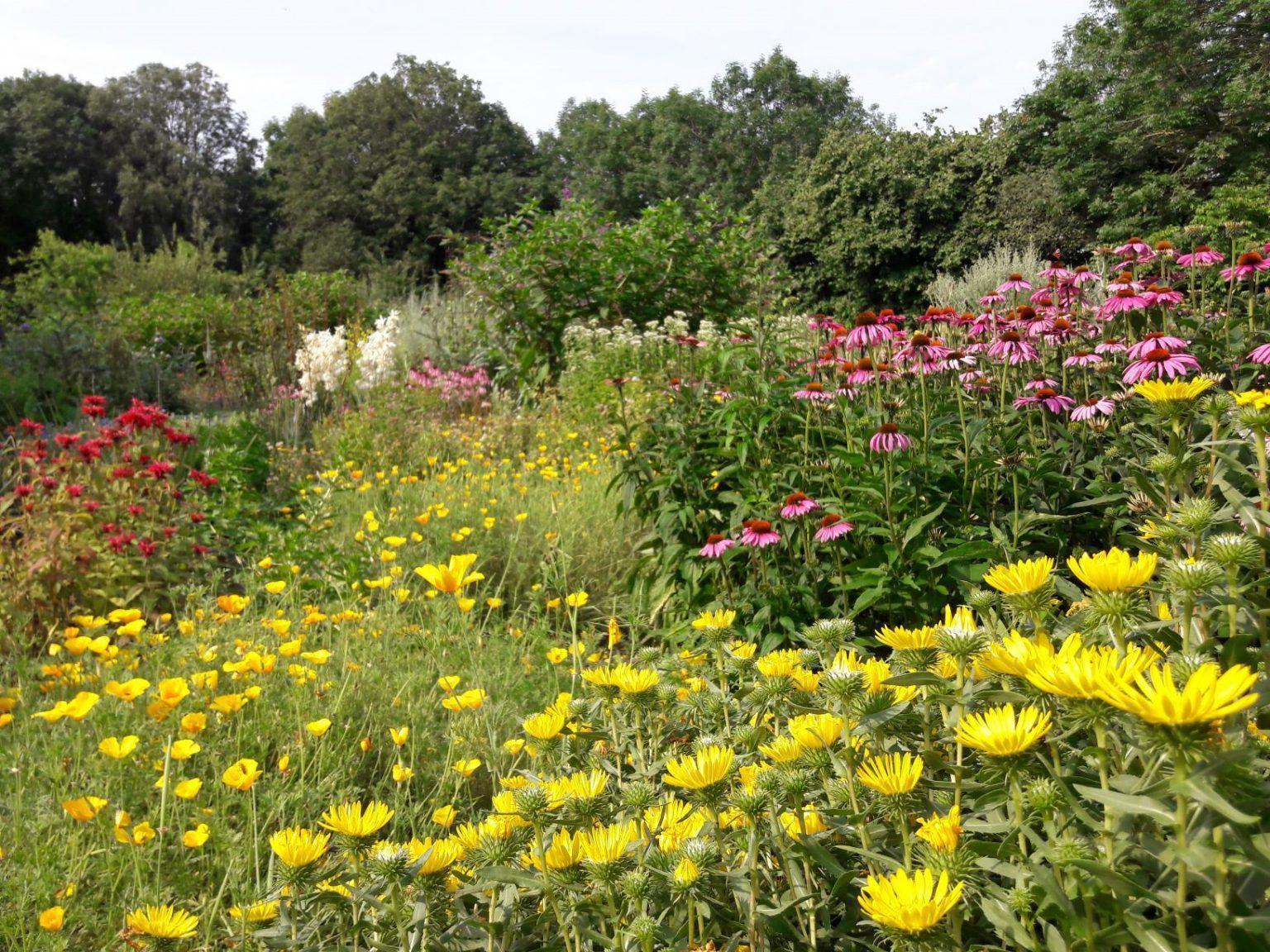 Hortus Alkmaar - doorkijkje
